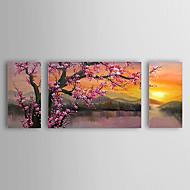 Maalattu Kukkakuvio/Kasvitiede Horisontaalinen Panoramic,Classic Perinteinen 3 paneeli Kanvas Hang-Painted öljymaalaus For Kodinsisustus