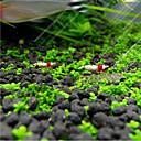 رخيصةأون أدوات التنظيف-ديكور حوض السمك نبات مائي مصغرة الديكور مجوهرات