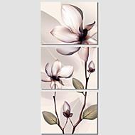 植物の / 現代風 / ポップアート キャンバスプリント 3枚 ハングアップする準備ができました , 横式