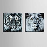 Недорогие -Холст Set Животное Modern,2 панели Холст Квадратная Печать Искусство Декор стены For Украшение дома