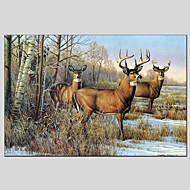 billiga Djurporträttmålningar-Hang målad oljemålning HANDMÅLAD - Abstrakt Djur Klassisk Moderna Inkludera innerram