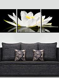 preiswerte -Leinwand Kunst Blumen anmutigen weißen Set von 3