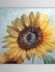 Dipinto a mano della pittura a olio floreale fioritura di girasole con telaio allungato