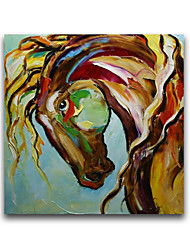 cheap -Horse Head Animal Oil Painting Products for New Design Cheap Price Free Shiping