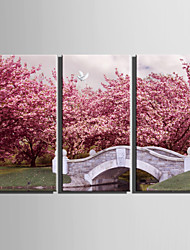 cheap -E-HOME® Stretched Canvas Art Pink Cherry Trees And Small Bridges Decoration Painting  Set Of 3