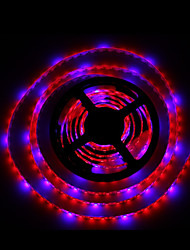 5M SMD5050 4Red1Blue 300LED IP65 Hydroponic Systems Led Plant Grow Light Waterproof Led Grow Strip Light(DC12V)