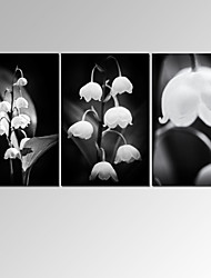 VISUAL STARYulan magnolia flower Wall Art for Home Decor 3 Panels Giclee Print on Canvas Ready to Hang