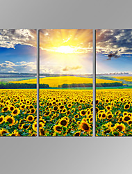 cheap -VISUAL STAR 3 Panel Sunflower  Planet Photos Print on Canvas Wall Decoration Canvas Art Ready to Hang