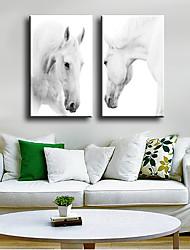 baratos -Estampado Laminado Impressão De Canvas - Animais Modern