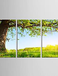Canvas Set Landscape Floral/Botanical Classic Pastoral,Three Panels Canvas Vertical Print Wall Decor For Home Decoration