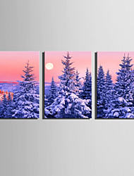 E-HOME Stretched Canvas Art Snow Fog Pine Forest Decoration Painting Set Of 3