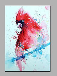 cheap -Hand-Painted Animal Red Parrot  Ready To Hang  Modern One Panel Canvas Oil Painting For Home Decoration
