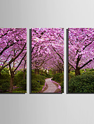 cheap -E-HOME Stretched Canvas Art Pink Grove Decoration Painting Set Of 3