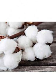 preiswerte -Katze Hund Pullover Hundekleidung Totenkopf Motiv Weiß Fuchsia Gitter Wollen Kostüm Für Haustiere Lässig/Alltäglich