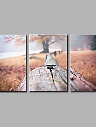 Hand-Painted Photographic Horizontal Panoramic,Artistic Nature Inspired Rustic Birthday Modern/Contemporary Office/Business Cool
