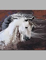 Seabiscuit 100% pinturas a óleo pintadas a mão contemporâneas Arte de parede de arte moderna para decoração de sala
