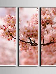 Недорогие -Холст в раме Набор в раме - ботанический Цветочные мотивы / ботанический Пластик Иллюстрации Предметы искусства