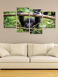 Недорогие -Декоративные наклейки на стены - 3D наклейки Пейзаж / Животные Гостиная / Детская
