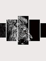 voordelige -Print Rolde canvasafdrukken Afdrukken Op Opgespannen Doek - Dieren katten Hedendaags Modern Vijf panelen