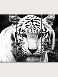 Недорогие -С картинкой Отпечатки на холсте - Модерн Реализм Классика Modern 3 панели