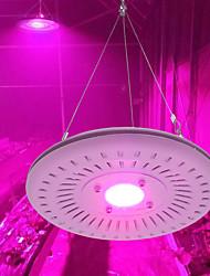 Недорогие -AcStar 1 комплект 50 W 950 lm 1 Светодиодные бусины Полного спектра Для парниковых гидропоники Растущие светильники Фиолетовый 220 V 110 V Овощеводство
