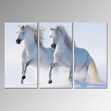 Animal / Lazer / Fotografia / Moderno / Romântico / Pop Art / Viagem Impressão em tela 3 Painéis Pronto para pendurar , Vertical
