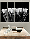 Toiles Tendues Art botanique White Tulip Lot de 4