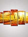 Imprimeu fotografie Imprimeu Canava Peisaj Călătorie Timp Liber Botanic Fotografic Romantic Cinci Panouri Orizontal Decor de perete For