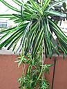 1 1 ramură Poliester / Plastic Plante / Others Cosul de flori Flori artificiale 26.771inch/68cm