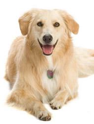 Hundeklær og tilbehør